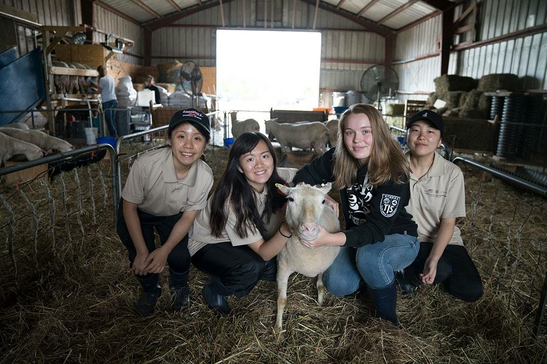 Joey Lam (1st from left) learns how to take care of goats at the farm at Cornell University.