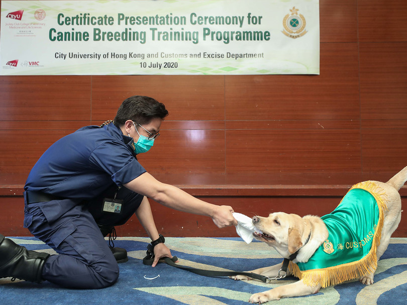 CityU organises canine breeding programme for HK Customs