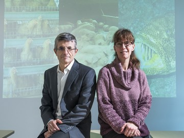 Prof Dirk Pfeiffer and Professor Sophie St-Hilaire