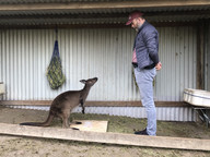 Kangaroo research